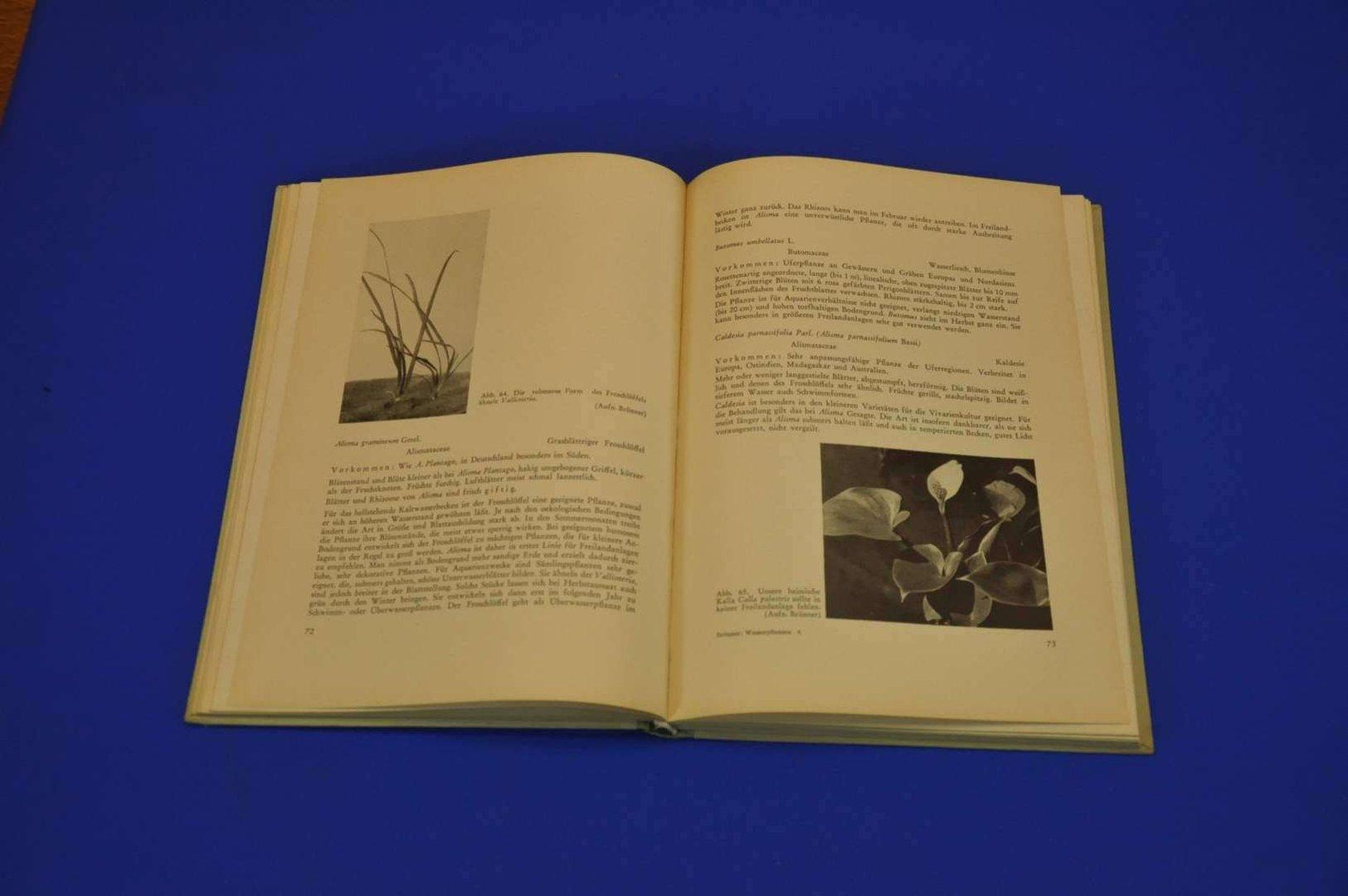 wenzel 1953 wasserpflanzen kusera. Black Bedroom Furniture Sets. Home Design Ideas