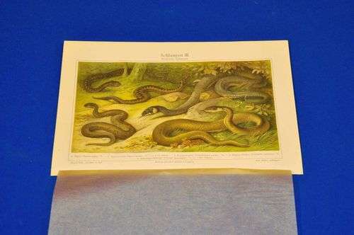 Chromolithography panel native snakes 1906